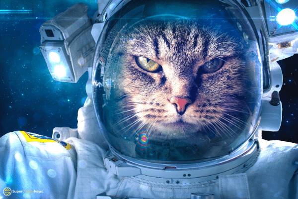 mooncat NFT